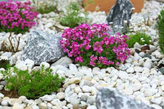 Cómo hacer una rocalla para el jardín   Blog Verdecora