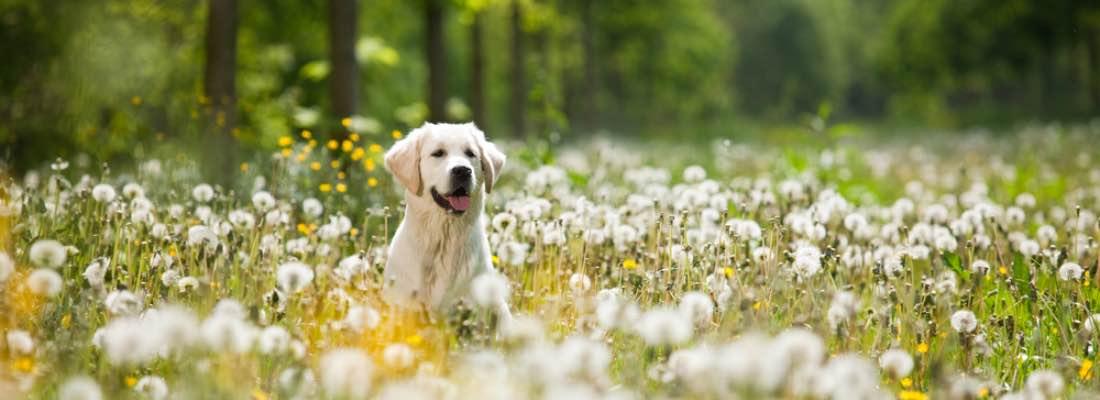 Elegir entre los tipos de antiparasitarios para perros