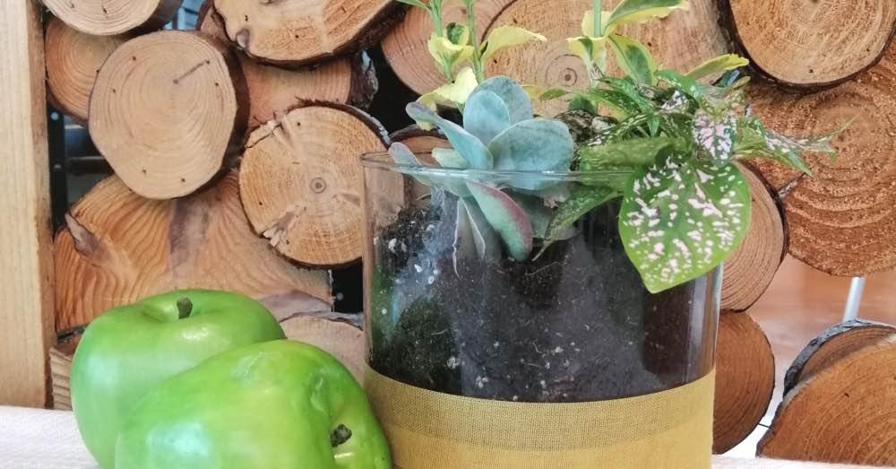 Diy Cómo Hacer Macetas De Cristal Con Vasos Blog Verdecora
