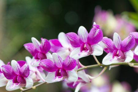 La luz más adecuada para las orquídeas cymbidium