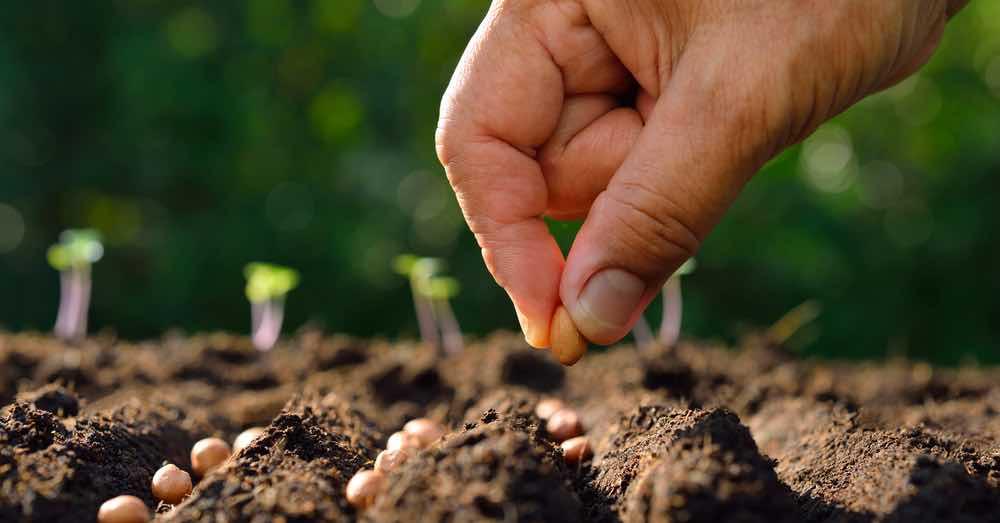 7 semillas de hortalizas para plantar en abril | Blog Verdecora