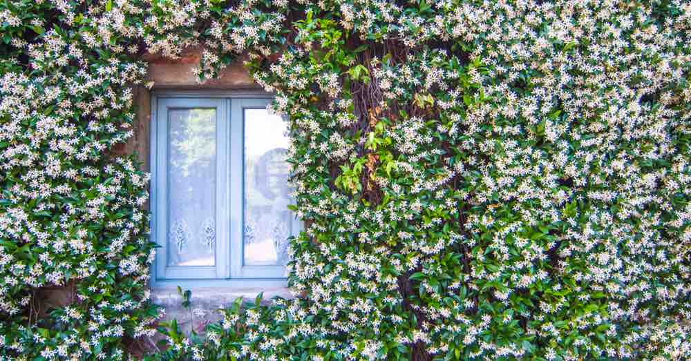 Plantas para fachadas de casa