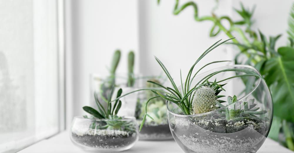 Beneficios de tener un terrario de plantas