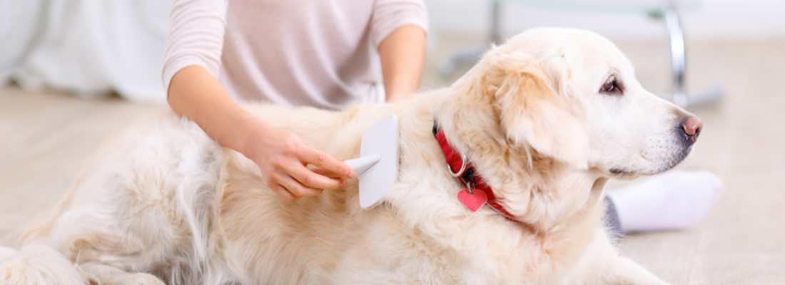 Cómo elegir entre los tipos de cepillos para perros
