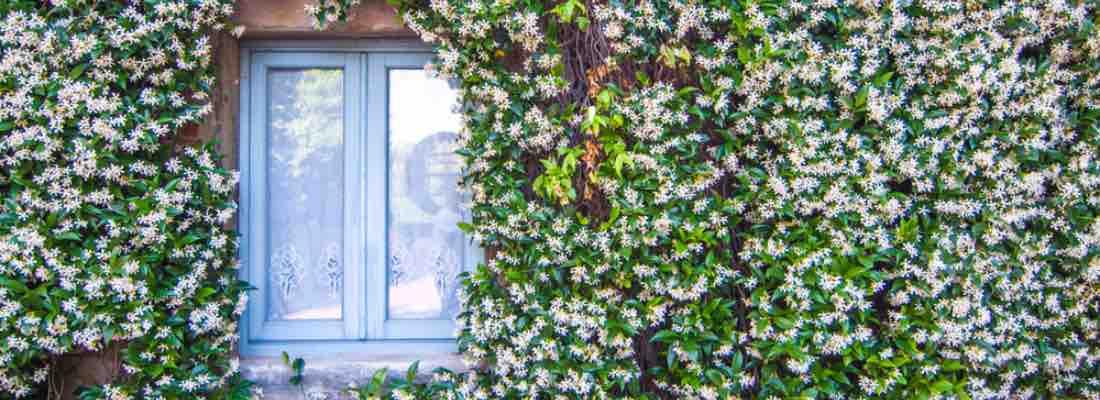 Ideas de plantas para fachadas de casa