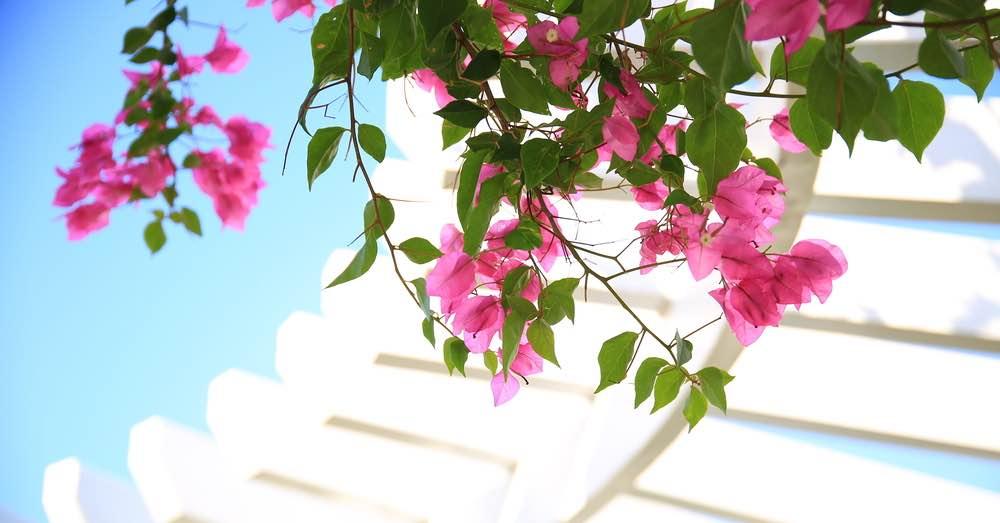 7 plantas mediterráneas perfectas para tu casa