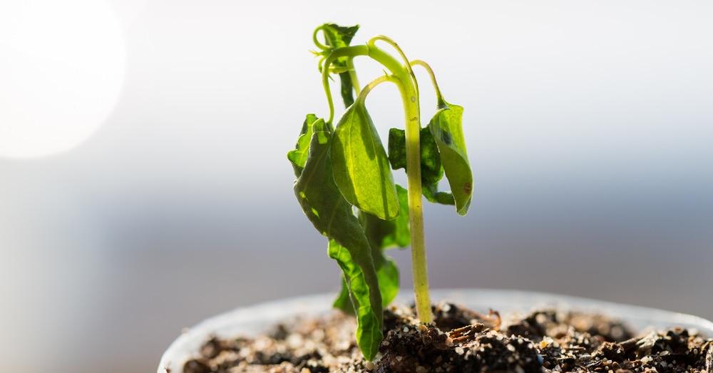 Cómo revivir una planta seca tras las vacaciones | Blog Verdecora