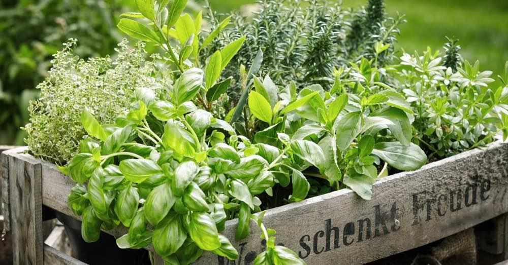 7 consejos para cultivar plantas aromáticas en macetas