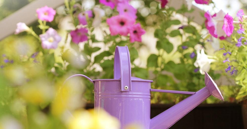 7 plantas de verano con flor para cualquier espacio