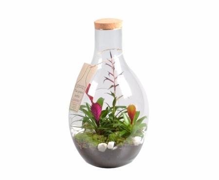 Terrario de plantas con bromelia