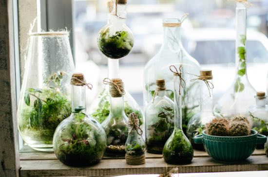 Terrario de plantas tropicales