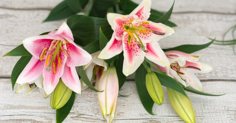 Flores para ocasiones especiales: cómo elegir