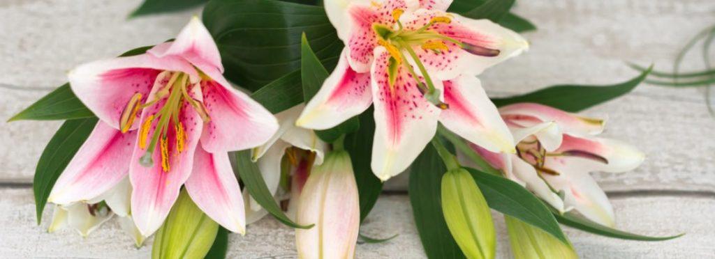 Cómo elegir flores para ocasiones especiales