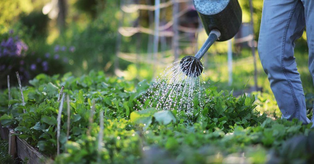 Plantas perennes beneficiosas para el huerto
