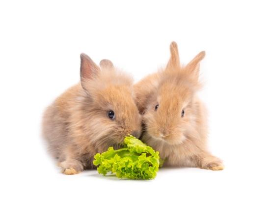 Verduras en la dieta del conejo