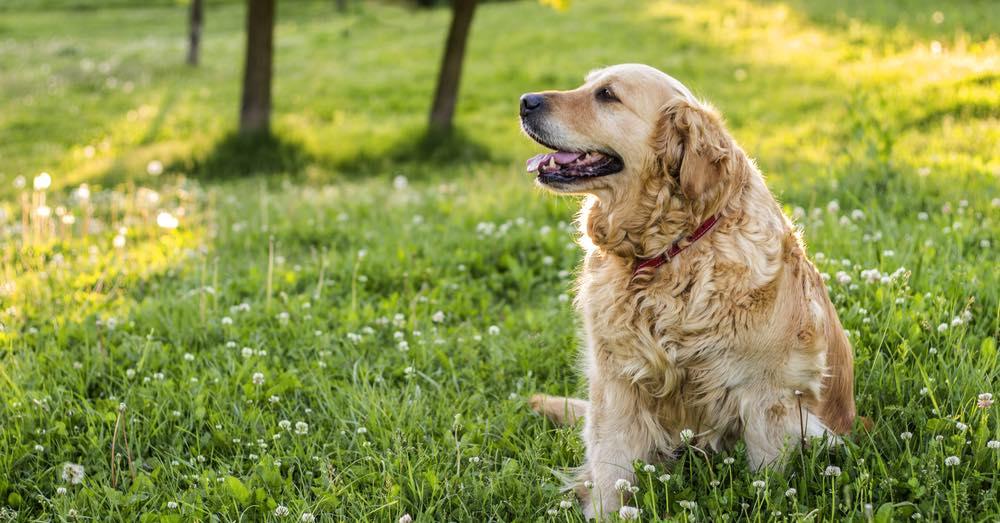 La artrosis en perros: cómo identificarla y paliarla