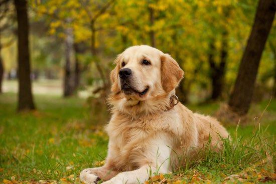 Cómo detectar la artrosis en perros