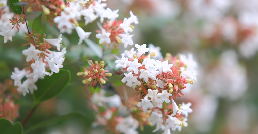 5 arbustos resistentes al frío para el jardín