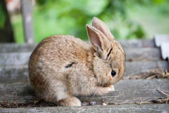 Consejos para la muda del pelo del conejo