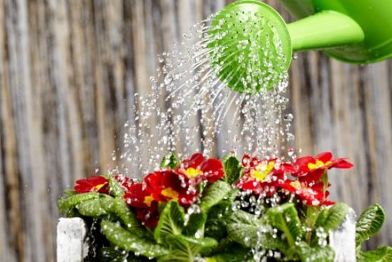 El riego, uno de los errores al cuidar plantas más habitual
