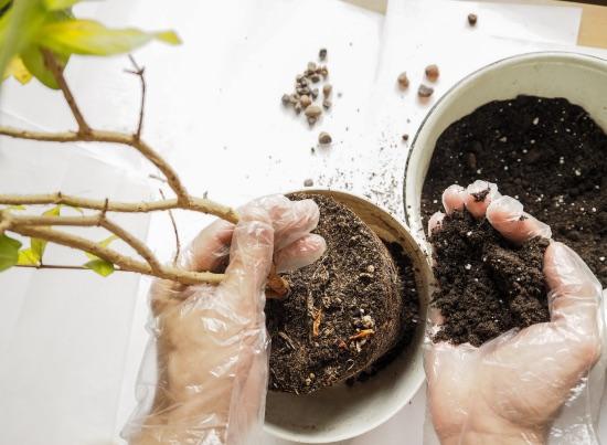 No trasplantar, uno de los errores al cuidar plantas más habitual