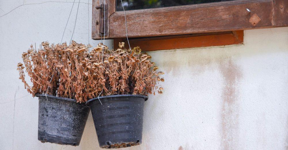 7 errores al cuidar plantas que pueden estropearlas