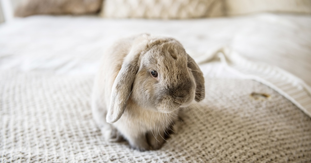La muda del pelo del conejo: qué necesitas saber