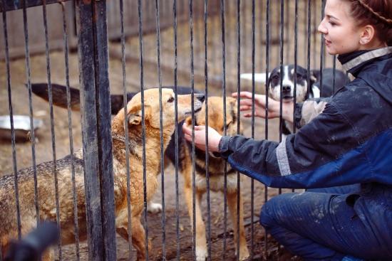 Protectoras que colaboran con quienes dicen quiero adoptar un perro