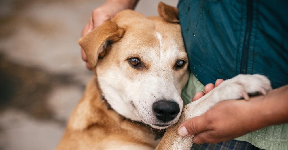 Quiero adoptar un perro: cómo hacerlo con Verdecora