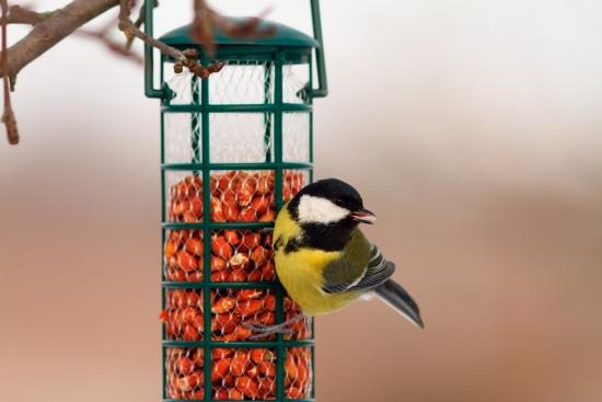 Consejos para atraer pájaros a tu jardín