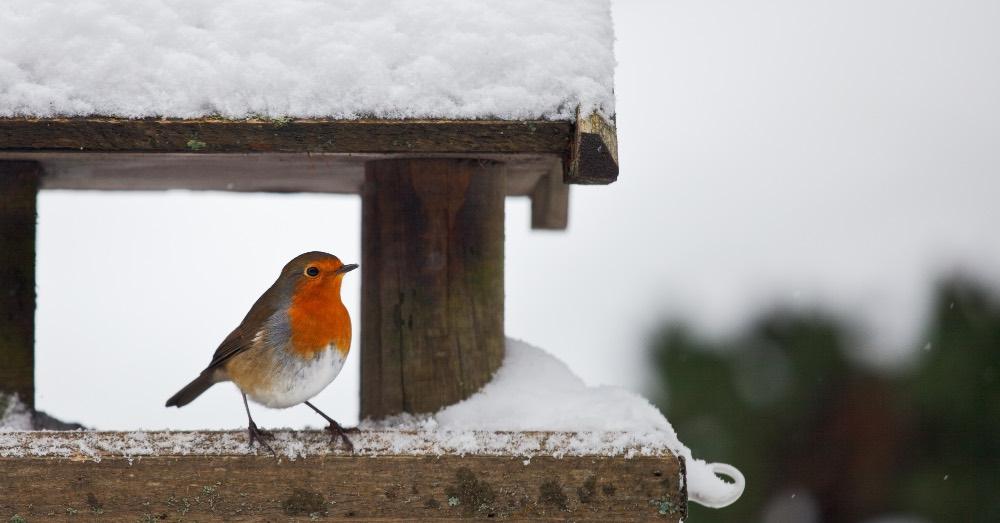Cómo atraer pájaros al jardín en invierno
