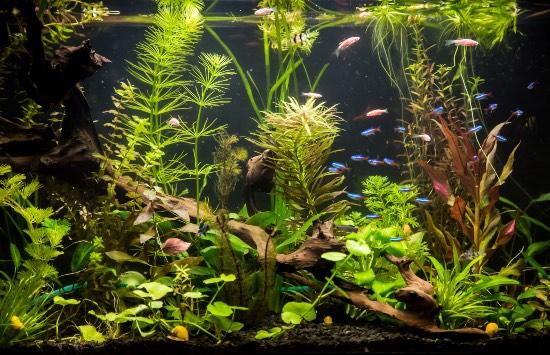 Cómo evitar las enfermedades de los peces de acuario