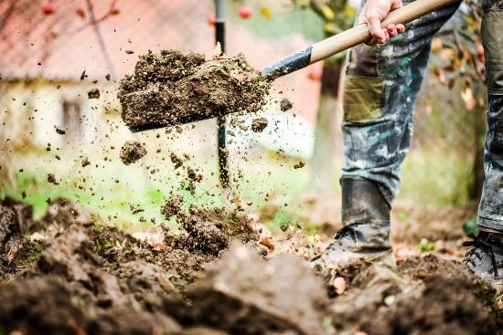 Preparar el terreno, fundamental para plantar a raíz desnuda