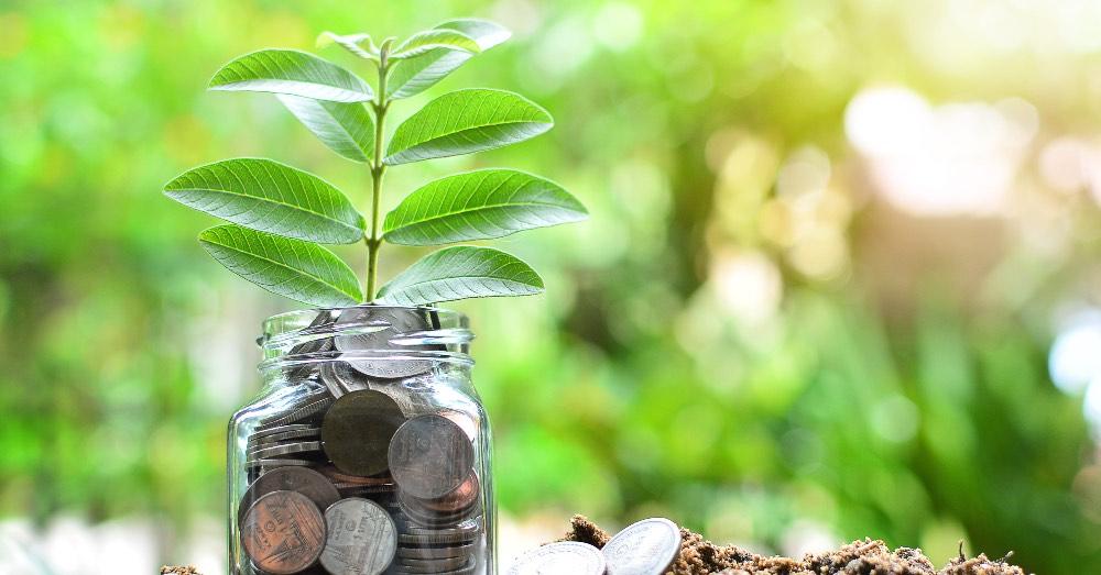 7 Plantas que atraen dinero y prosperidad   Blog Verdecora