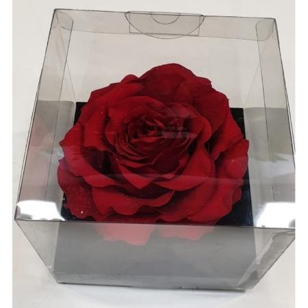 Rosa eterna, una de nuestras ideas para regalar en San Valentín