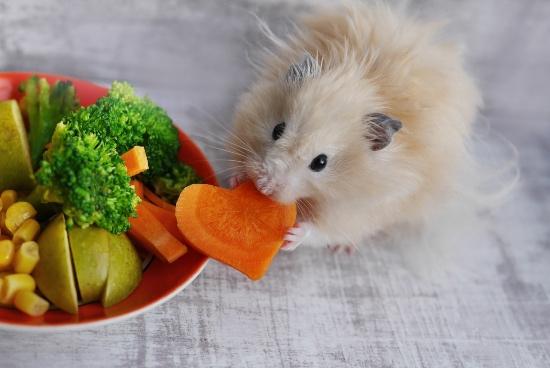 Verduras que comen los hámsters
