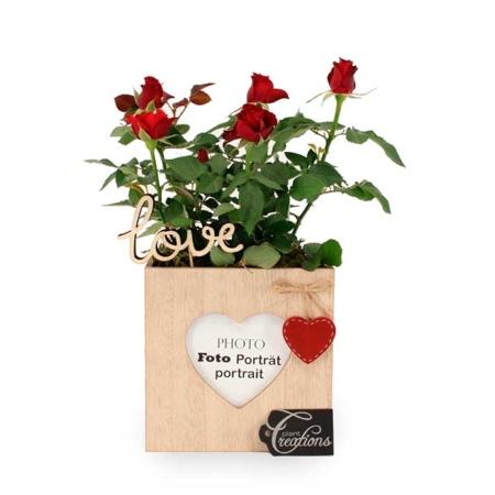 Rosal pitiminí con maceta, una de nuestras ideas para regalar en San Valentín