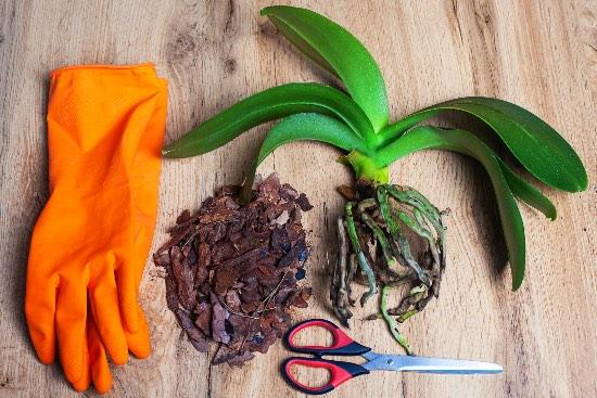 Suggerimenti per prevenire i disturbi dell'orchidea