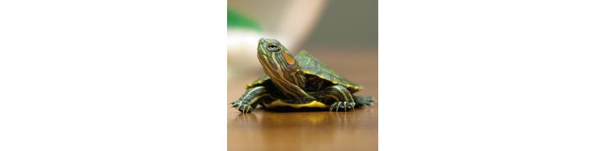 Tortugas y Reptiles
