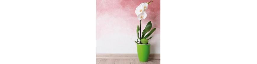 Macetas Orquídea