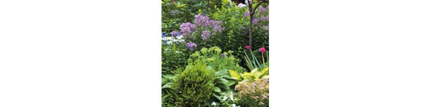 Flor y Planta Artificial
