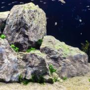 Rocas Acuario
