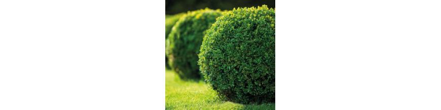 Arbustos Artificiales