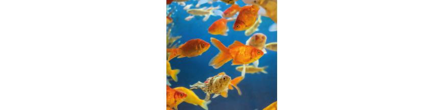 Salud del acuario