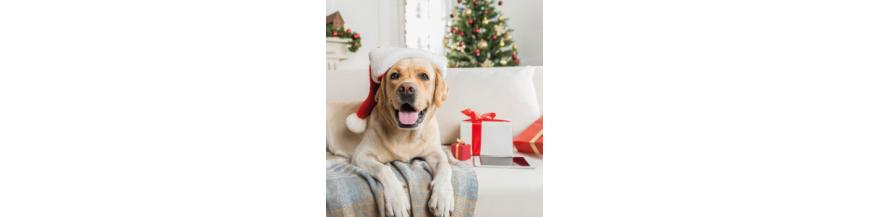 Navidad para tu Mascota