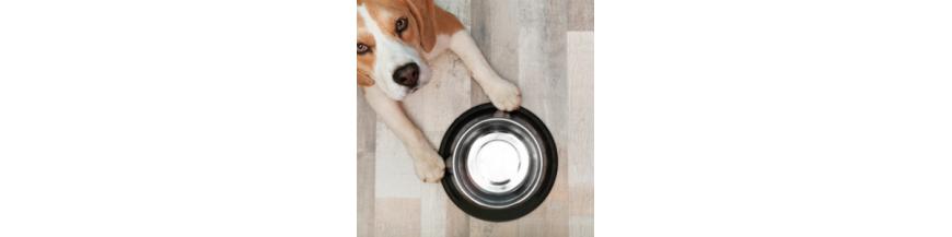 Comederos y bebederos perros