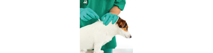 Antiparasitarios perros