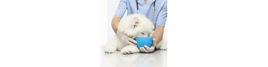 Alimentación Veterinaria para Perro