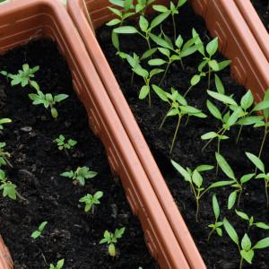 Jardineras Sintéticas