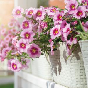 Plantas de Temporada Balcón y Terraza